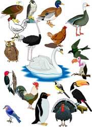 Бесплатно картинки домашние птицы